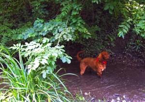 Ralph enjoying the mud
