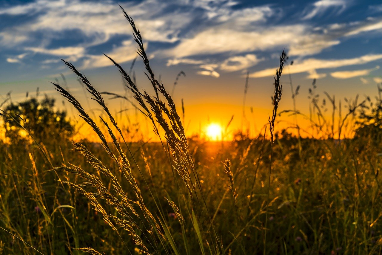 Sunset meadow.