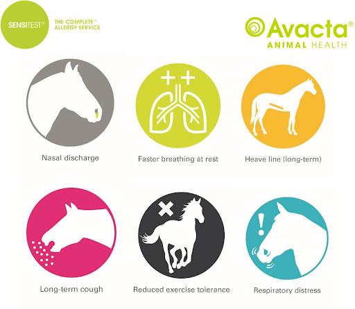 Equine Allergen symtoms chart.