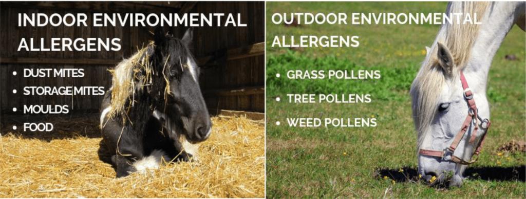 List of indoor and outdoor Equine Allergens.