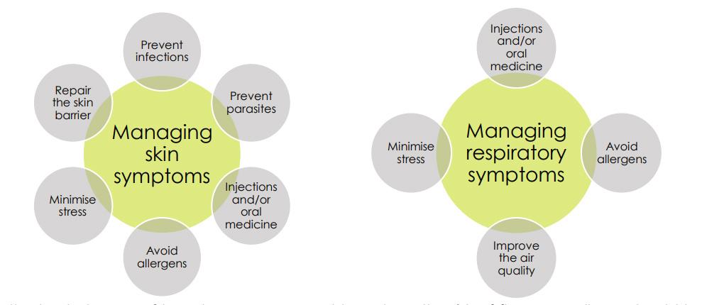 Management of cat allergies - skin symptoms and respiratory symptoms