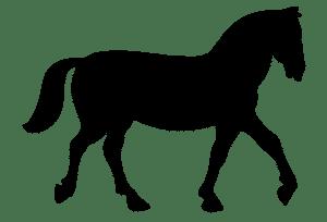 Equine silhouette