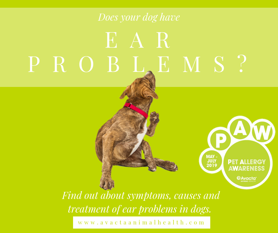 Ear-Problems-Blog-Social-Media-1.png
