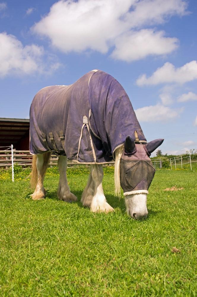 Horse-in-rug.jpg