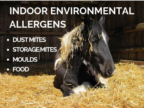 Indoor-environmental-allergens.png