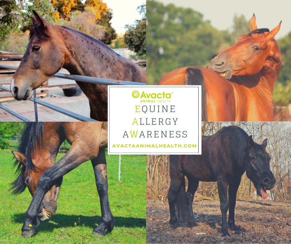equine-allergy-awareness-banner-facebook.png