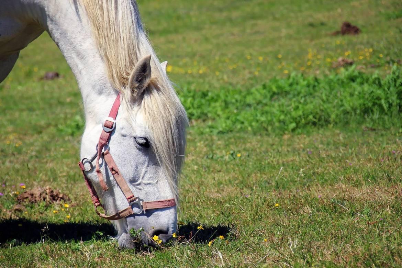 horse-1753383_1920-e1566290331114.jpg